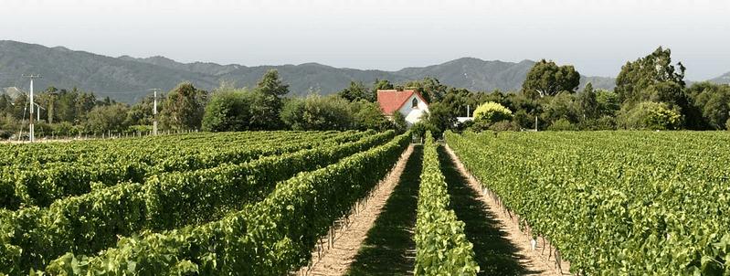 bird winery